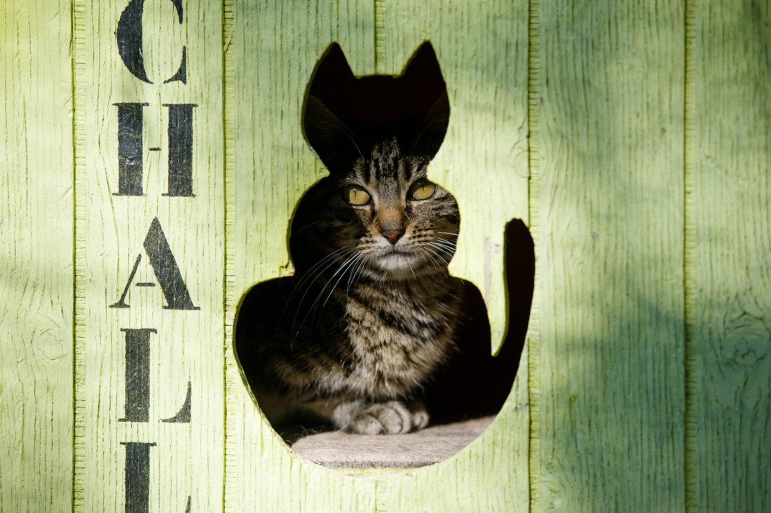 Des-animaux-et-des-hommes-chats-refuge-animalier