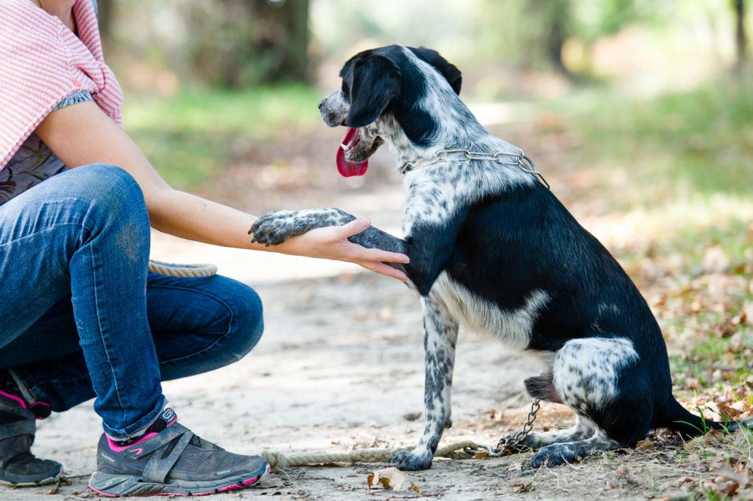 Des-animaux-et-des-hommes-chiens-refuge-animalier